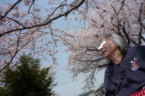 花見2019①